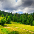 Clearing with footpath in a mountain forest before the storm. — Stok fotoğraf
