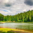 Stockfoto: Evening on mountain lake among forest
