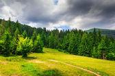 在暴风雨来临前的山地森林中的小径与结算. — 图库照片