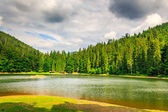 Evening on mountain lake among the forest — Stockfoto