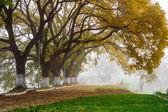 Autumn trees in the fog — Stock Photo