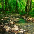 Stones and tree roots in clear forest brook — Stock Photo #29580473