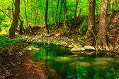 Green treetops in a forest creek — Stock Photo
