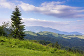 Tree on the edge of clearing in mountains — Stock Photo