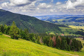 Coniferous forest on a steep mountain slope — Stock Photo