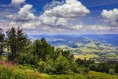 Bosco di conifere su un pendio di montagna — Foto Stock