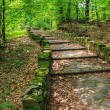 Winding stone steps with foliage vertical — Stock Photo #30236093