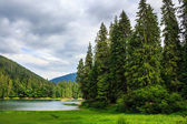 Coniferous lake shore in mountains — Stock Photo