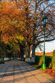 деревья пожелтели на утро осенью аллея — Стоковое фото