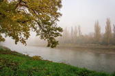 Yellowing tree in fog by the river — Stock Photo