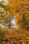Vertical yellow abandoned railroadin fall — Stock Photo