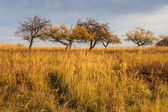 Dry autumn trees and grass under a heavy gray sky — Stock Photo
