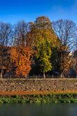 Autumn trees near the river — Stock Photo