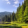 Lake in mountains surrounded by pine forest — Stock Photo #30839019