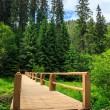 New bridge from road to forest. vertical — Stock Photo
