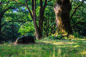 Stone near a tree in the forest. horizontal — Stock Photo