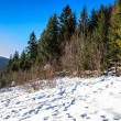 Snow-covered pine forest on the hillside in winter — Stock Photo #30933761