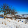 Bare trees on hillside under the winter blue sky — Stock Photo