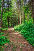 Pathway in a forest go up — Stock Photo