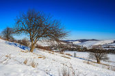 Bare trees on hillside under the winter blue sky — Stock Photo