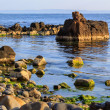 Rocky sea coast horizon with seaweed — Stock Photo