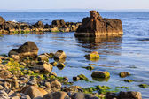 Rocky sea coast horizon with seaweed — Stock Photo