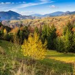 Autumn mountain landscape with mixed forest — Stock Photo #32465365