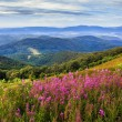 Flowers on mountain hillside — Stock Photo #32612905