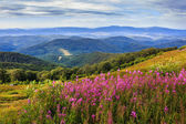 Flowers on a mountain hillside — Stock Photo