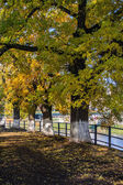 Yellowed trees along the fence on embankment — Stock Photo