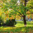 Sun rays in autumn tree foliage — Stock Photo