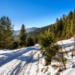 Road to mountain forest in winter — Stock Photo #32919949