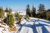 Kışın dağ yolu boyunca ağaçlar — Stok fotoğraf