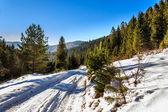 Droga do lasu górskiego w zimie — Zdjęcie stockowe