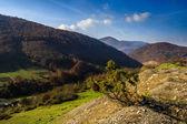 Tree on a rocky hillside in mountain autumn landscape — Stock Photo