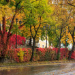 Autumn cityscape after rain, with yellowed trees and street lamp — Stock Photo