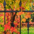 Постер, плакат: Red foliage on a metal fence