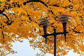 Lantern in a city park close-up on a foliage background — Stock Photo
