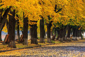Urban waterfront with yellow branch over the street — Stock Photo
