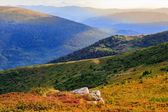 Autumn color illusion in mountain landscape by sunlight — Stock Photo