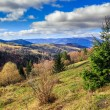 Conifer hillside near autumn forest on top of the mountain lands — Stock Photo #33820865
