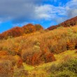 Stock Photo: Autumn hillside with pine and Colorful foliage aspen trees near