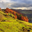 Autumn hillside with pine and Colorful foliage aspen trees near — Stock Photo