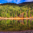 Autumn Mountain lake in coniferous forest — Stock Photo