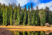 Autumn Mountain lake in coniferous forest — Stok fotoğraf