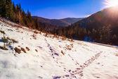 Verschneite straße, nadelwald in bergen — Stockfoto