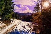 снежная дорога хвойный лес в горах — Стоковое фото