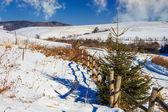 забор автомобильным снежный лес в горах — Стоковое фото