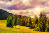 Coniferous forest on a steep mountain slope — Foto de Stock