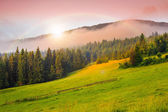 Cold fog on hot sunrise in mountains — Stock Photo